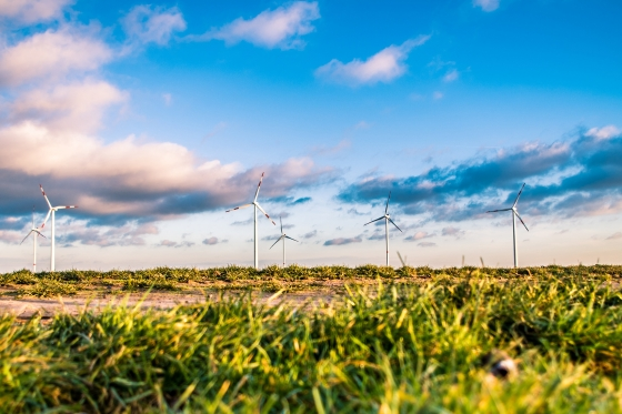 Wind farm in a field with blue sky
