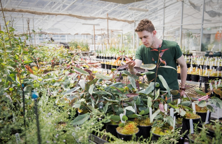 student looking at plants in a green house