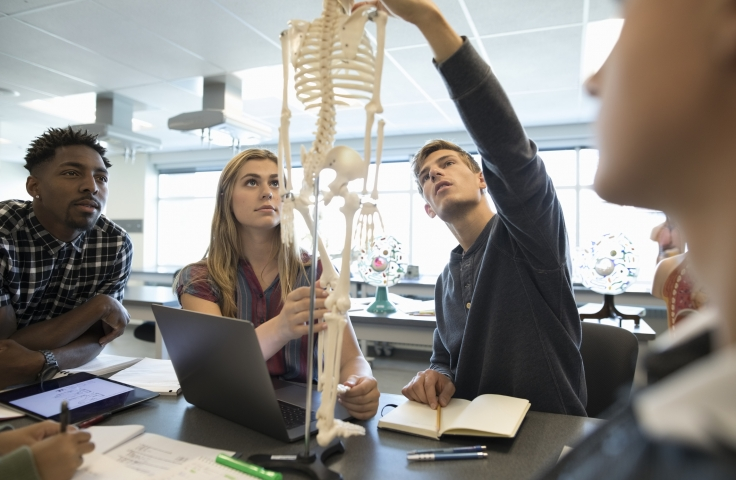 Students looking at skeleton