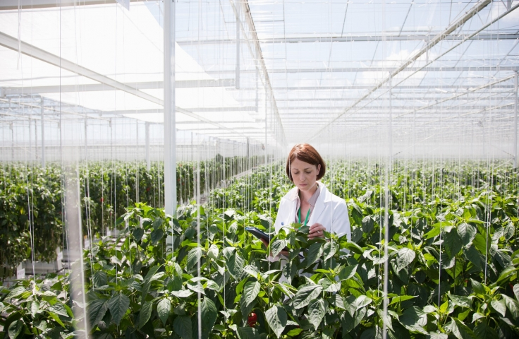 Person looking at plants in a greenhouse