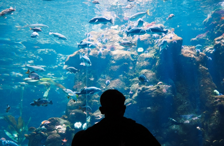 Person looking at an aquarium tank
