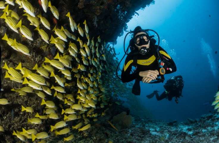 Two people underwater scuba diving by a school of fish